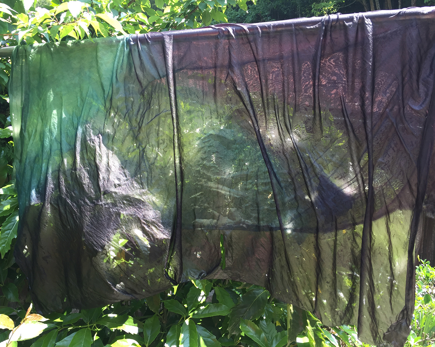 Silks drying in sun